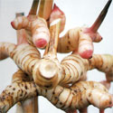 Thai Massage Herbs: Galangal